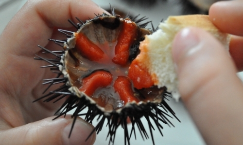 SEA URCHINS - HOW TO EAT THEM